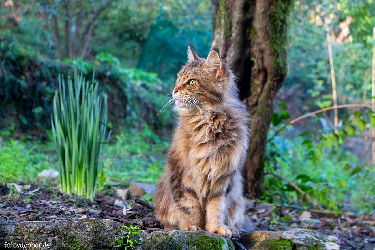 gatto camogli