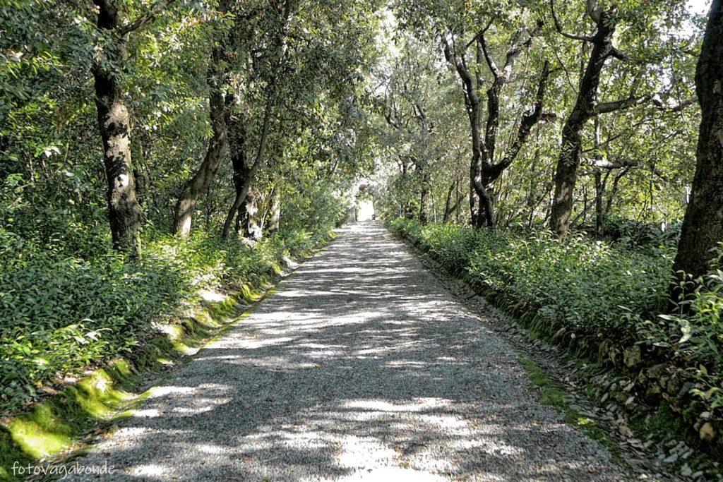 Viale-Gotico_Villa-Durazzo-Pallavicini