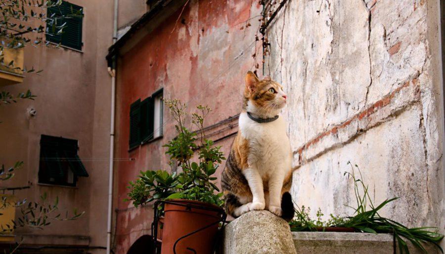 I Gatti del Carmine a Genova